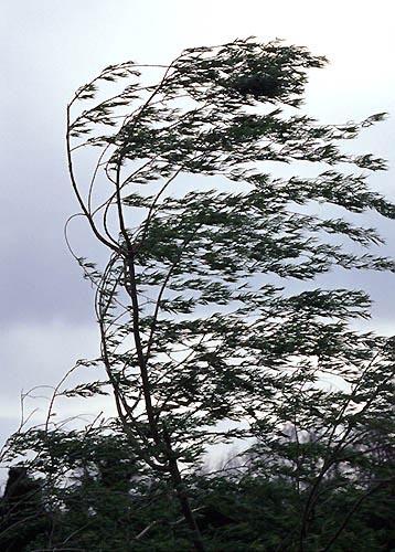 25) Solitude - Estelle dans Poésies vent1-s